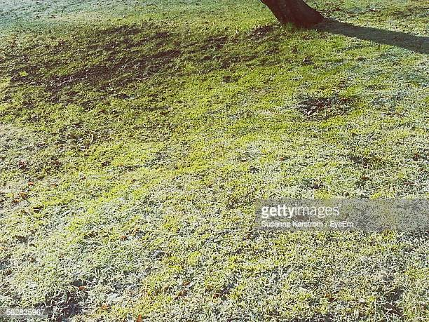 High Angle View Of Grass Surface And Tree Trunk