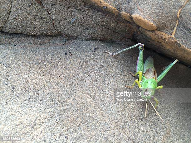 High Angle View Of Grasshopper On Rock
