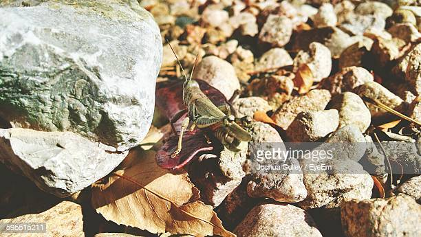 High Angle View Of Grasshopper On Rocks