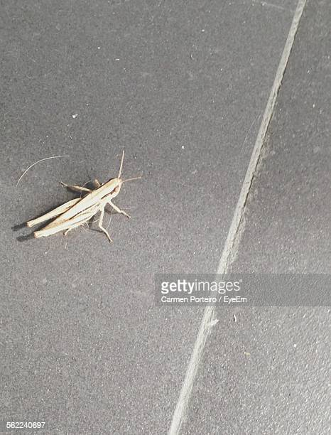 High Angle View Of Grasshopper On Street