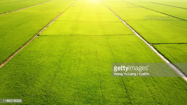 high angle view of green field - 水田 ストックフォトと画像