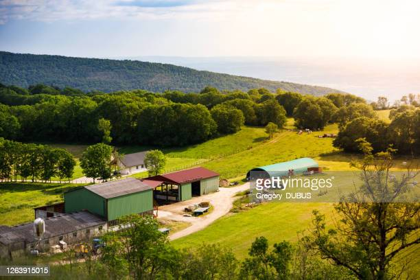 high angle view of green meadow and a farm with its sheds, tractors and some cows at sunset in french alps mountains - ain france stock pictures, royalty-free photos & images