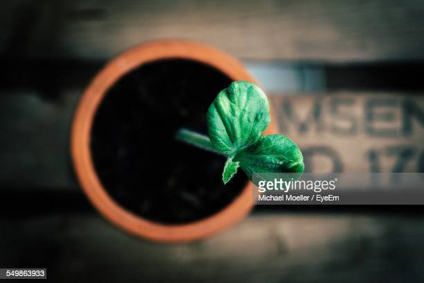 High Angle View Of Green Plant Growing Out Of Potted Plant