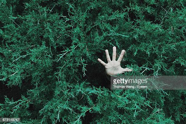 high angle view of hand coming out from bushes - hopeloosheid stockfoto's en -beelden
