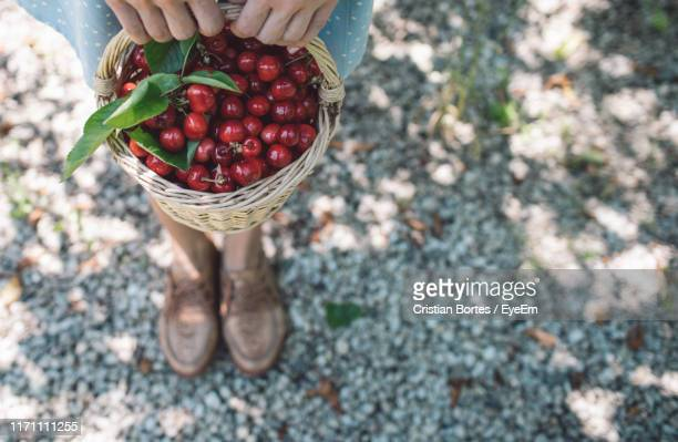 high angle view of hand holding cherries in basket - bortes stock photos and pictures