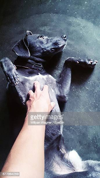 High Angle View Of Hand Touching Dog Lying On Floor