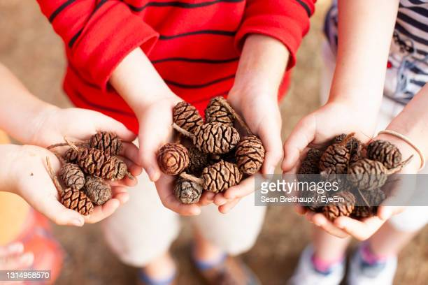 high angle view of hands holding pinecones - unknown gender stock pictures, royalty-free photos & images