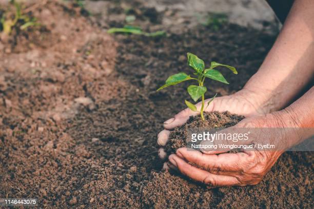 high angle view of hands holding plant in mud - planting stock pictures, royalty-free photos & images