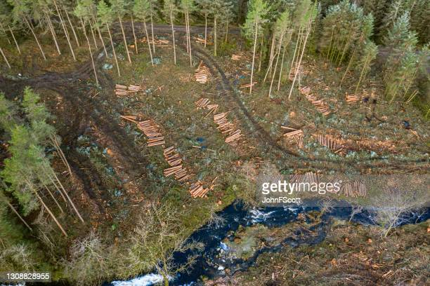 high angle view of harvesting in a scottish forestng - johnfscott stock pictures, royalty-free photos & images