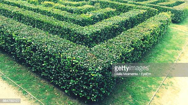 High Angle View Of Hedge In Park