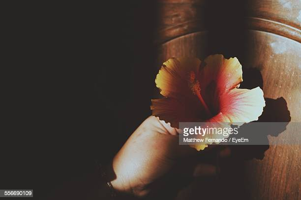 High Angle View Of Hibiscus Flower