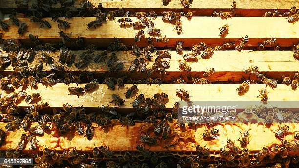 High Angle View Of Honey Bees On Beehive