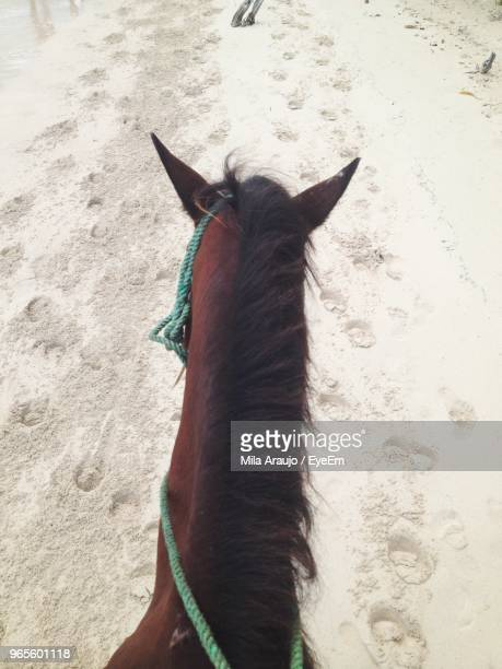 High Angle View Of Horse At Beach