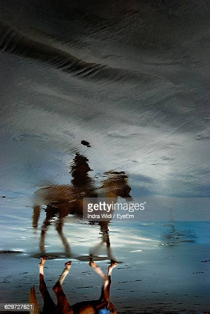 High Angle View Of Horse Reflection On Wet Shore