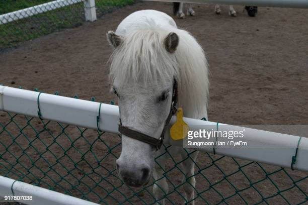 High Angle View Of Horse Standing By Fence At Barn