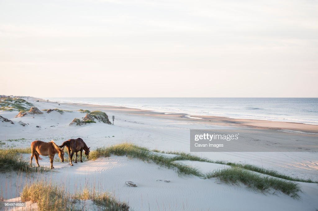 High angle view of horses grazing on field against sky : Stock Photo