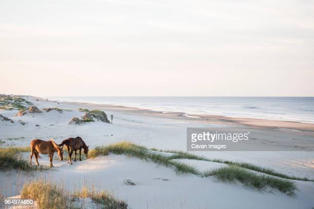 high angle view of horses grazing on field against sky - north carolina photos et images de collection