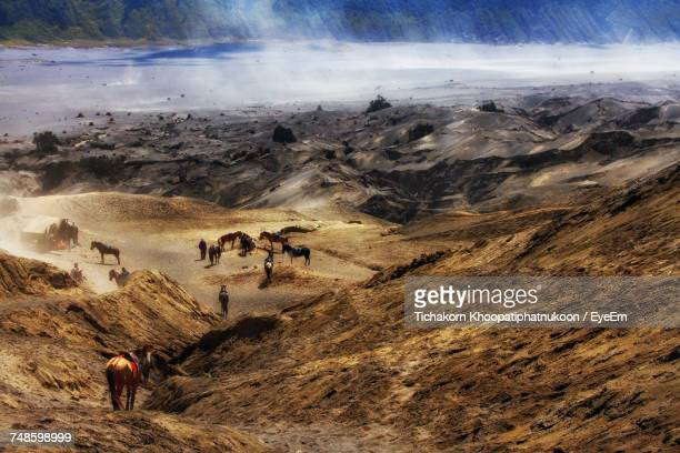 High Angle View Of Horses On Field At Mt Bromo