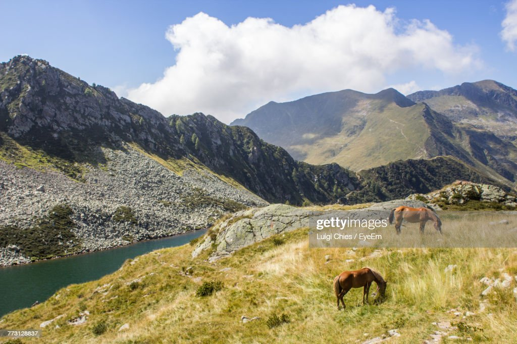 High Angle View Of Horses On Grassy Field Against Mountains : Photo