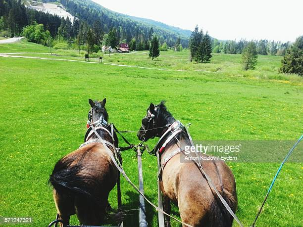 High Angle View Of Horses Pulling Cart On Grassy Field