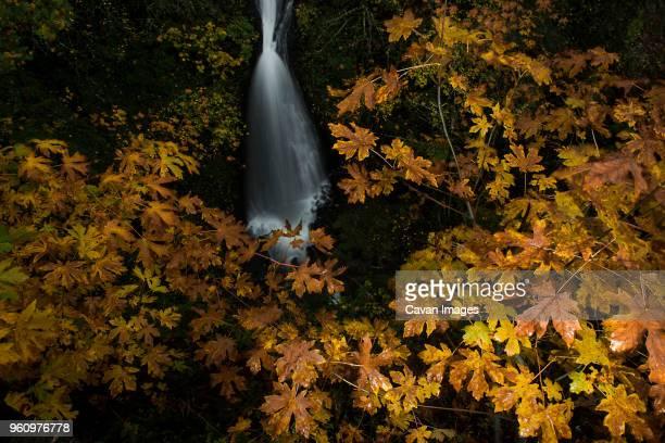 High angle view of Horsetail Falls at Mt Hood