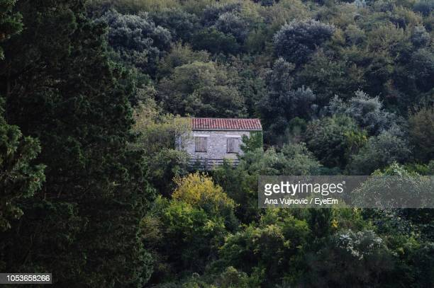 High Angle View Of House And Trees In Forest