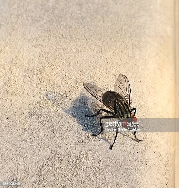 High Angle View Of Housefly On Field