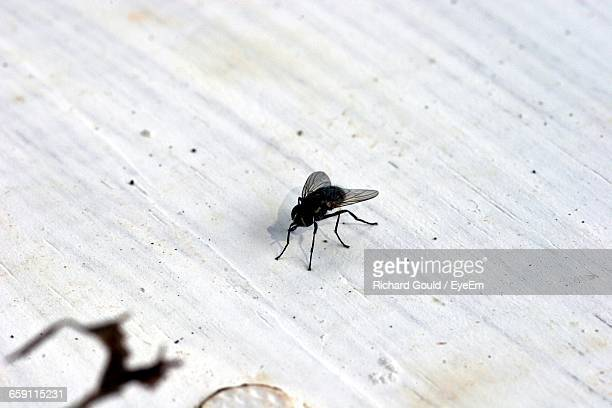 high angle view of housefly on textured surface - housefly stock pictures, royalty-free photos & images