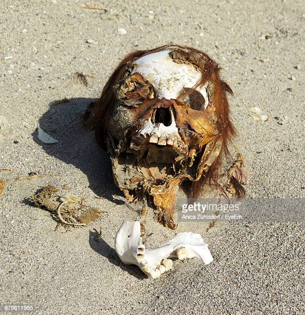 high angle view of human skull on sand - rotting stock pictures, royalty-free photos & images