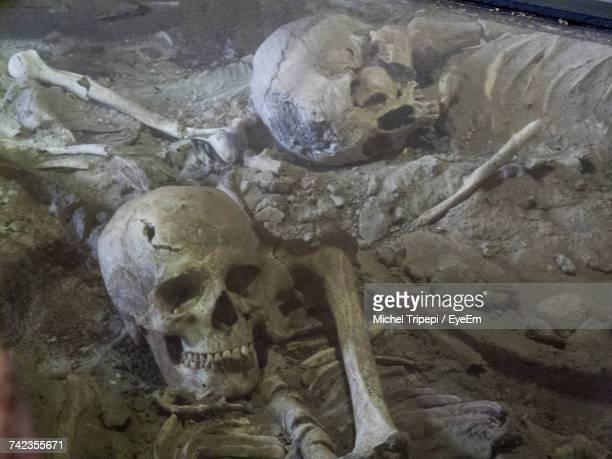 high angle view of human skulls in dirt - pompeya fotografías e imágenes de stock