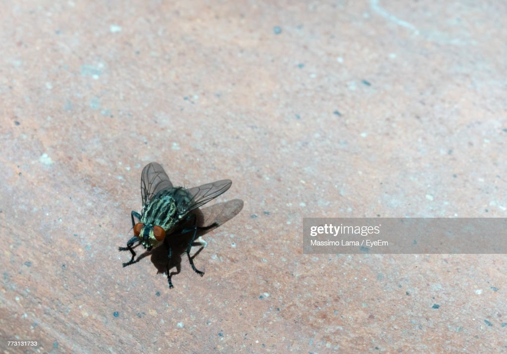 High Angle View Of Insect : Photo