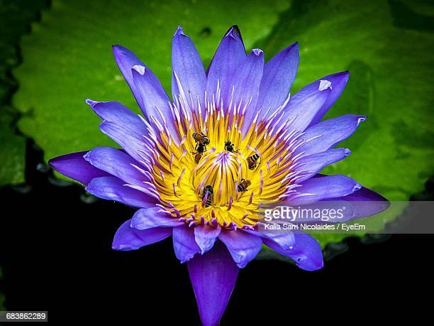 high angle view of insects on water lily - sarri stock pictures, royalty-free photos & images