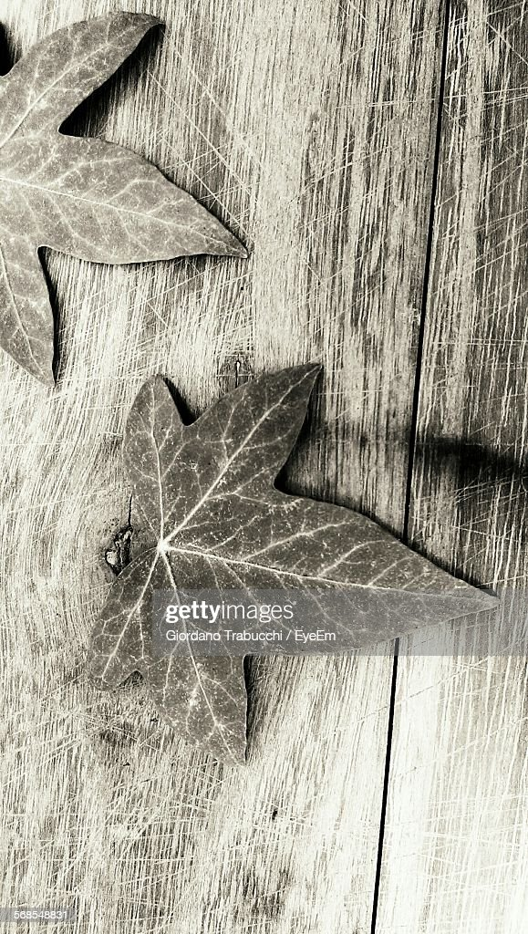 High Angle View Of Ivy Leaves On Wood : Stock Photo