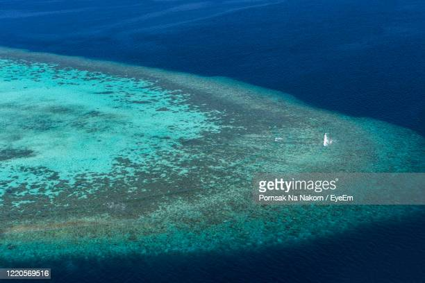 high angle view of jellyfish swimming in sea - atoll stock pictures, royalty-free photos & images