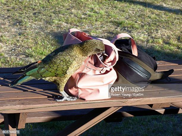 High Angle View Of Kea By Purse On Table