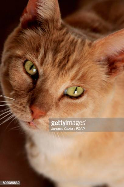high angle view of kitten looking at camera - janessa stock pictures, royalty-free photos & images