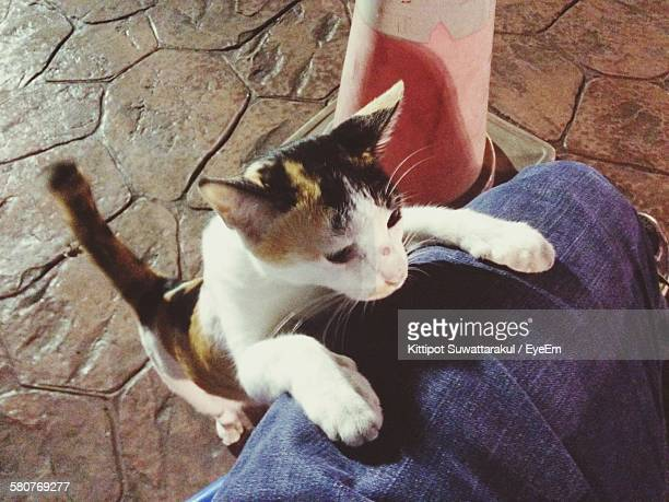 High Angle View Of Kitten On Man Lap At Footpath