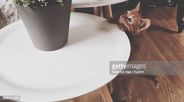High Angle View Of Kitten Reaching On Table At Home