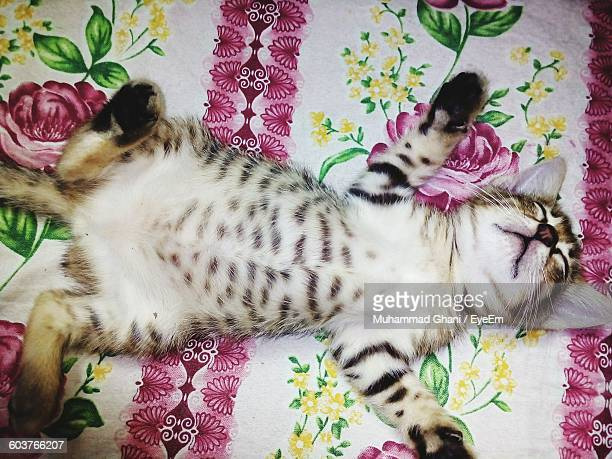 High Angle View Of Kitten Relaxing On Bed
