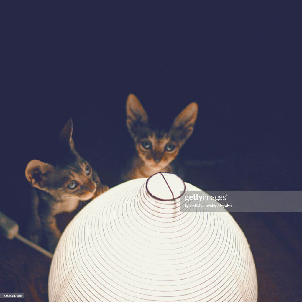 High Angle View Of Kittens By Illuminated Lamp In Darkroom : Stock Photo