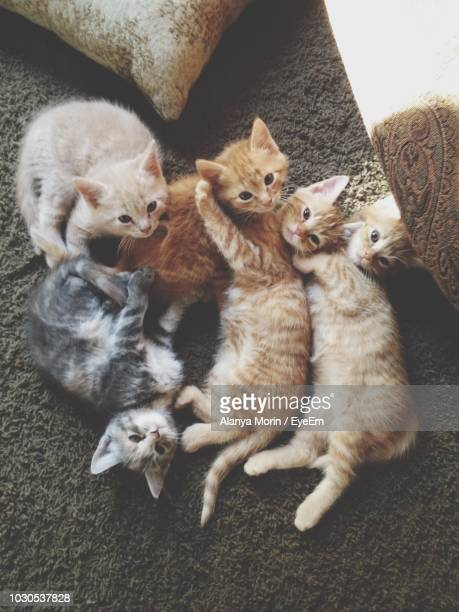 High Angle View Of Kittens