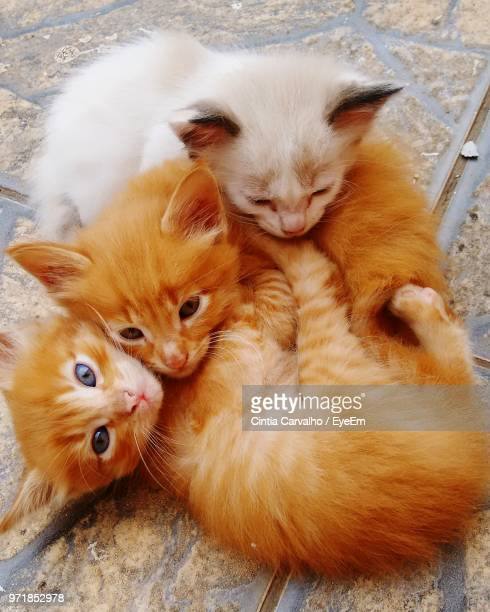 High Angle View Of Kittens Playing On Footpath