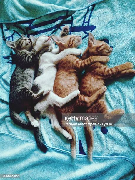 high angle view of kittens sleeping on bed - quattro animali foto e immagini stock