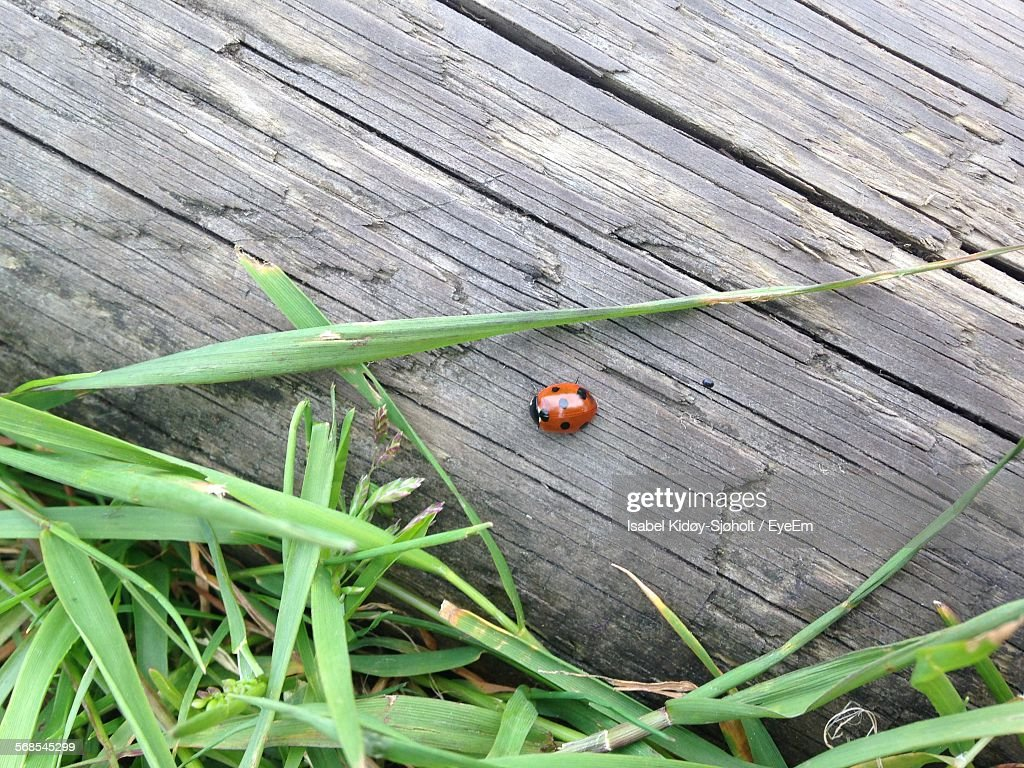 High Angle View Of Ladybug By Plants On Boardwalk : Stock Photo