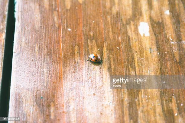 High Angle View Of Ladybug On Table