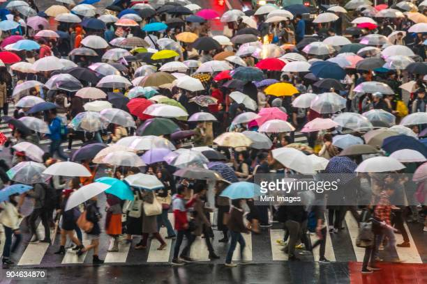 high angle view of large group of pedestrians carrying umbrellas crossing urban street. - pedestrians stock photos and pictures