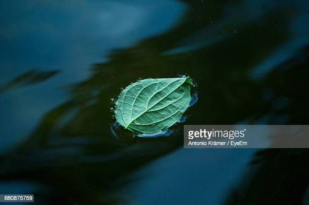 High Angle View Of Leaf Floating On Lake