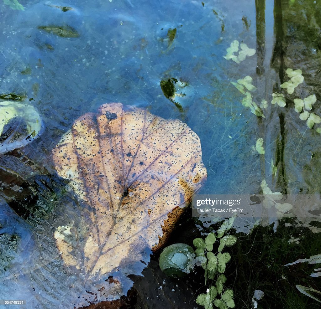 High Angle View Of Leaf In Water : Stockfoto