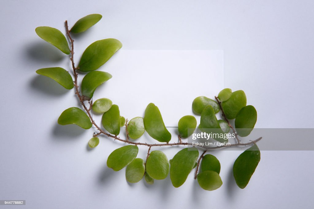 High Angle View Of Leaves Against White Background : Stock Photo
