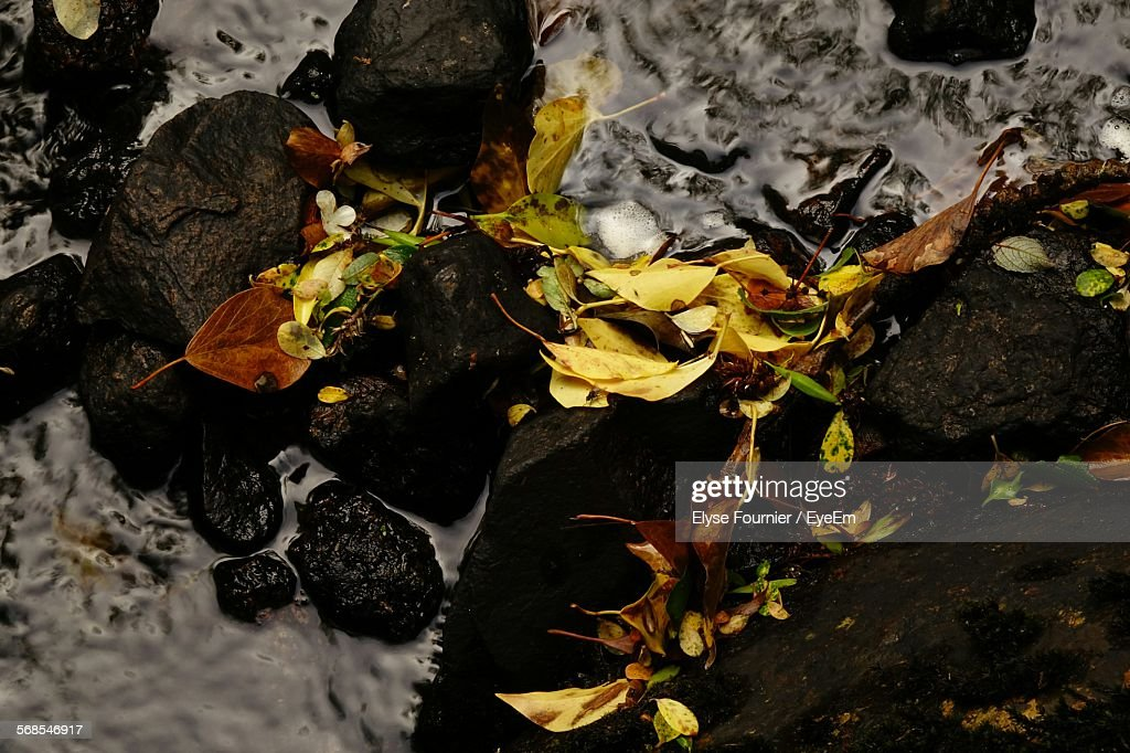 High Angle View Of Leaves And Rocks In Stream : Stock Photo